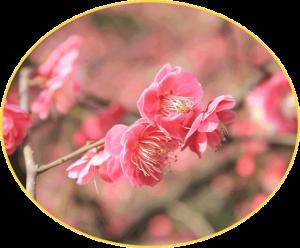 Pflanztipps für bienenfreundliche Pflanzen